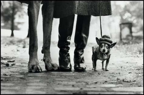 Elliot Erwitt - New York, 1974